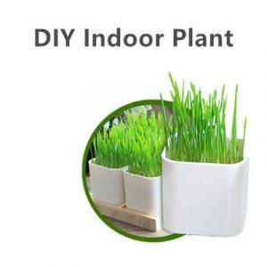 Indoor DIY Plant