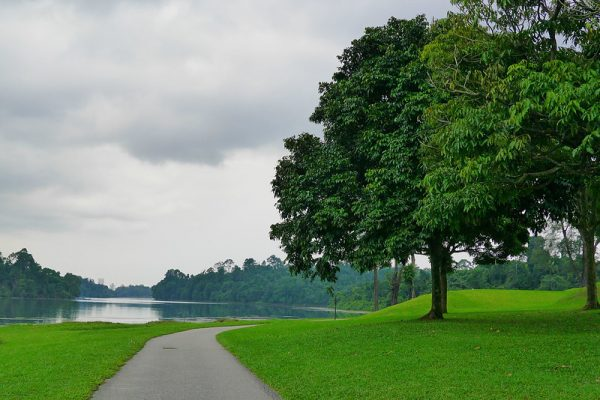 quiet places in singapore macritchie reservoir park