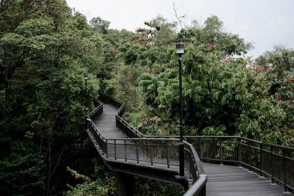 instagram worthy places singapore kent ridge canopy walk nature