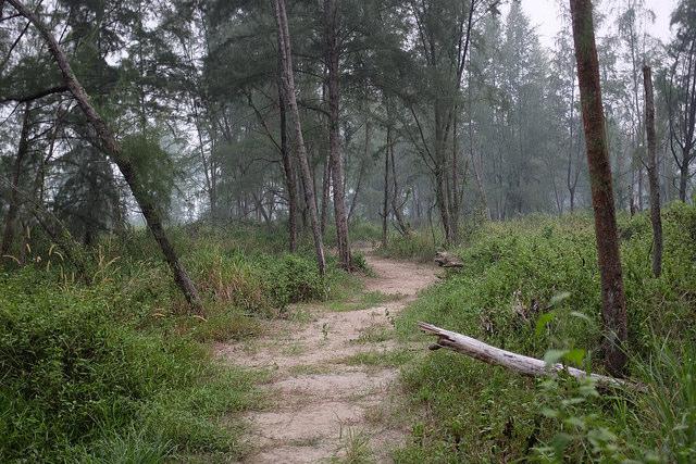 Hiking Trails Singapore Coney Island Hiking Trail