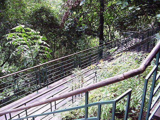 Hiking Trails Singapore Labrador Park Wooden Walkway