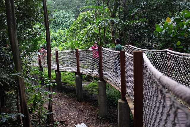 Hiking Trails Singapore Sungei Buloh Hiking Trail