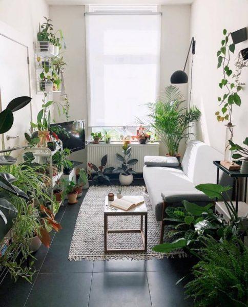hdb home decor idea indoor plant greenery living room
