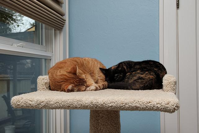 two cats cat tree sleeping