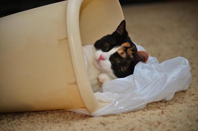 cute cat in trash bin