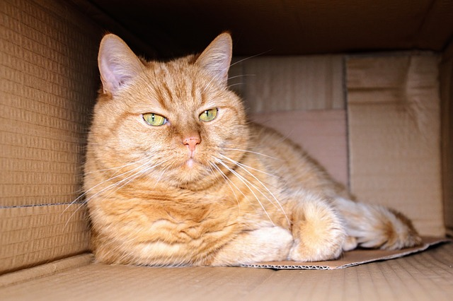 fat ginger cat box