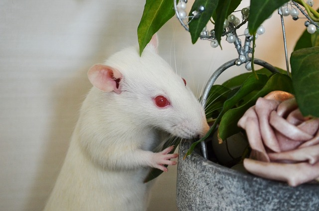white rate eating plants toxic to pets