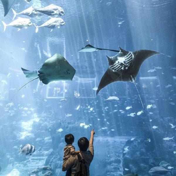 christmas gift experience singapore activity s.e.a. aquarium seaason of rediscovery underwater world