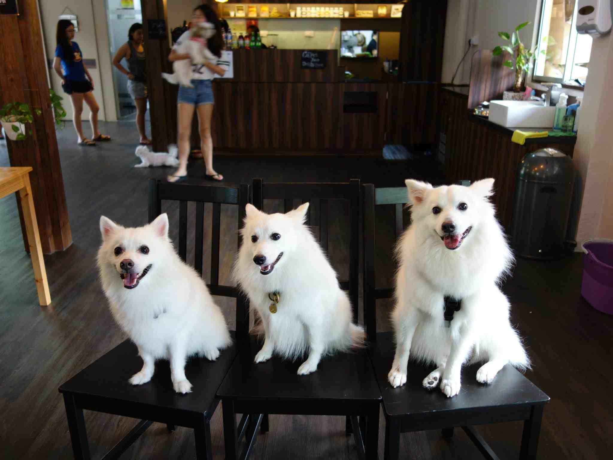 Ah B Cafe singapore pet friendly