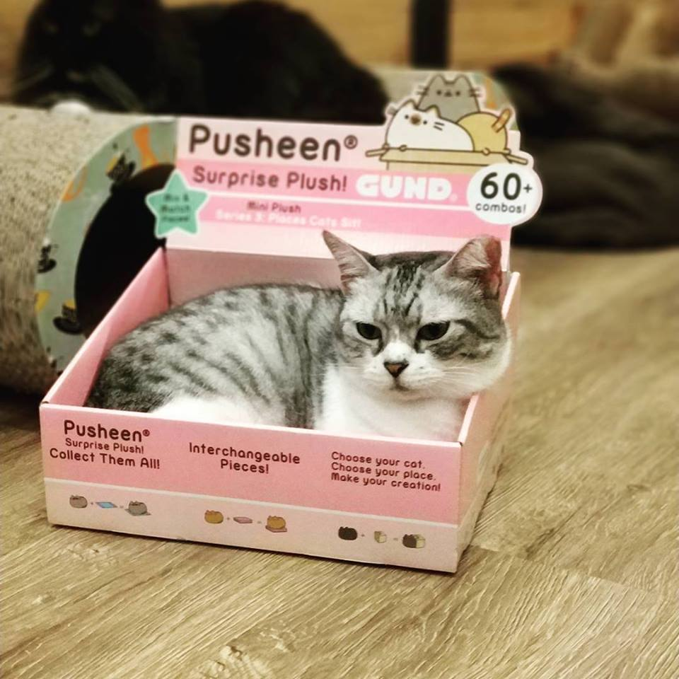 the cat cafe singapore