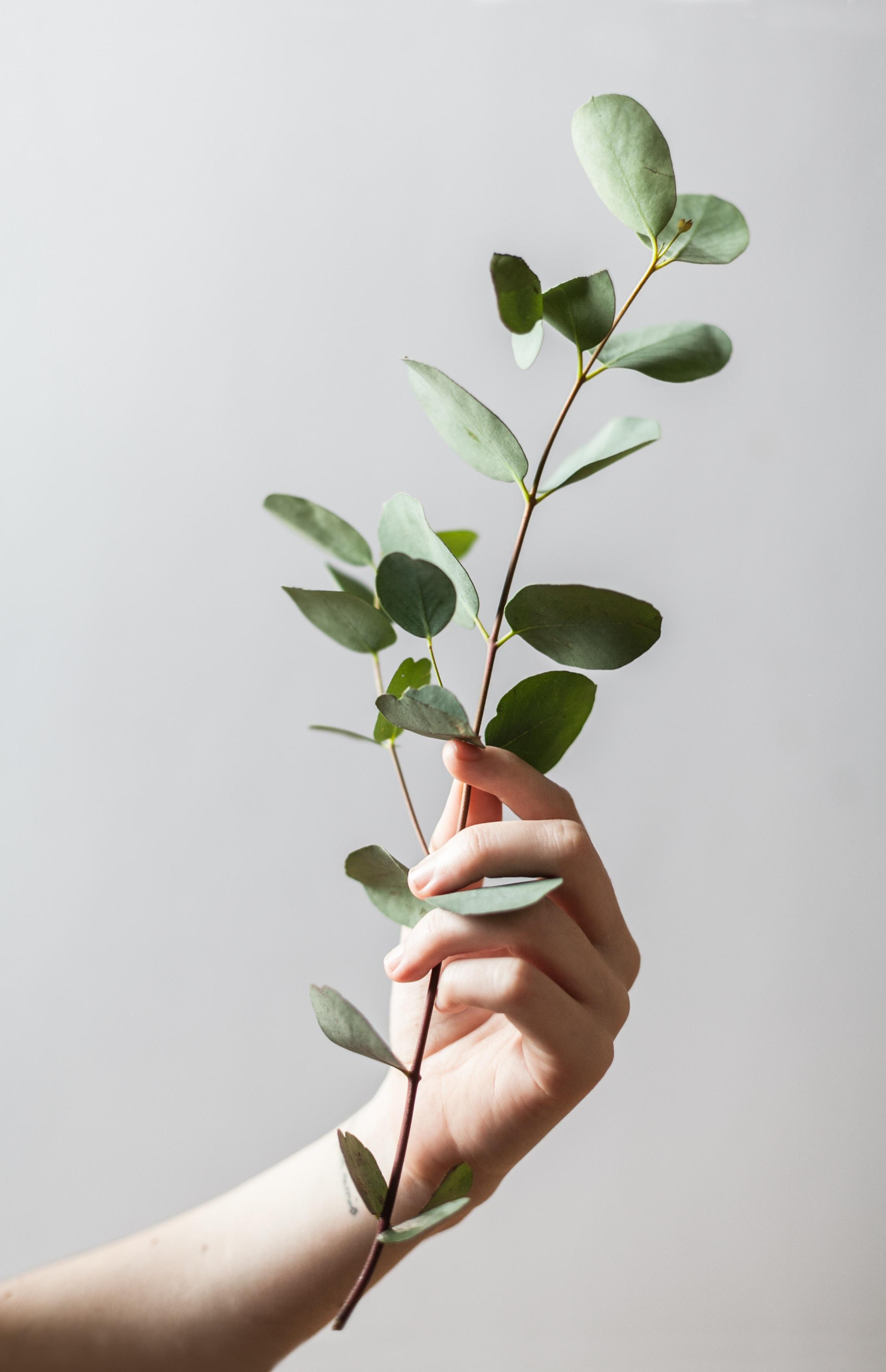 eucalyptus aromatherapy best essential oil