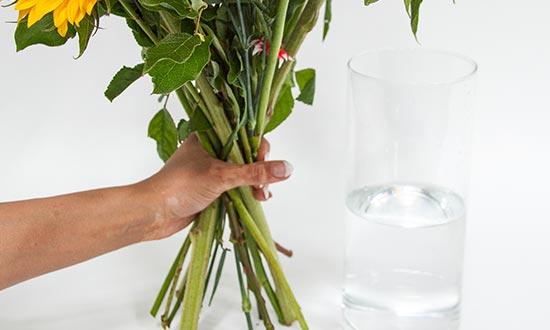 Fresh Water Flowers