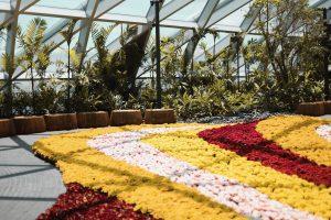 Petal Garden