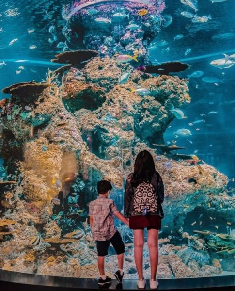 sentosa things to do in singapore with kids