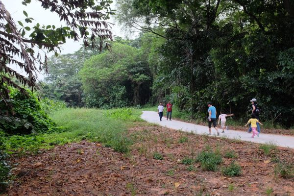 sungei buloh things to do in singapore with kids