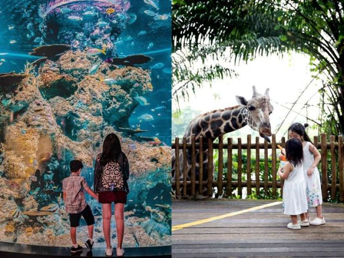 things to do in singapore with kids featured image