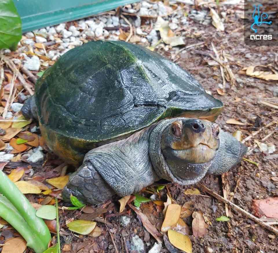 acreas wildlife sanctuary singapore