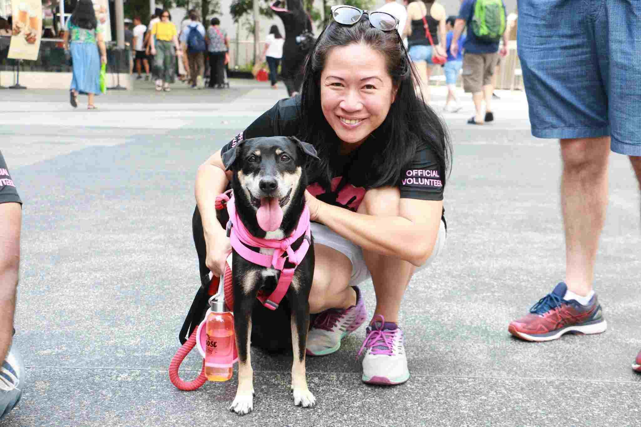 cas animal shelter singapore