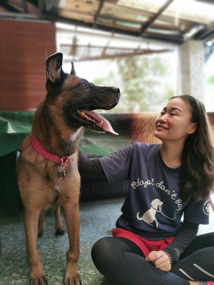 gentle paws animal shelter singapore