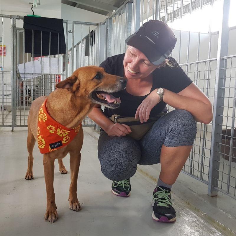 oscas animal shelter singapore