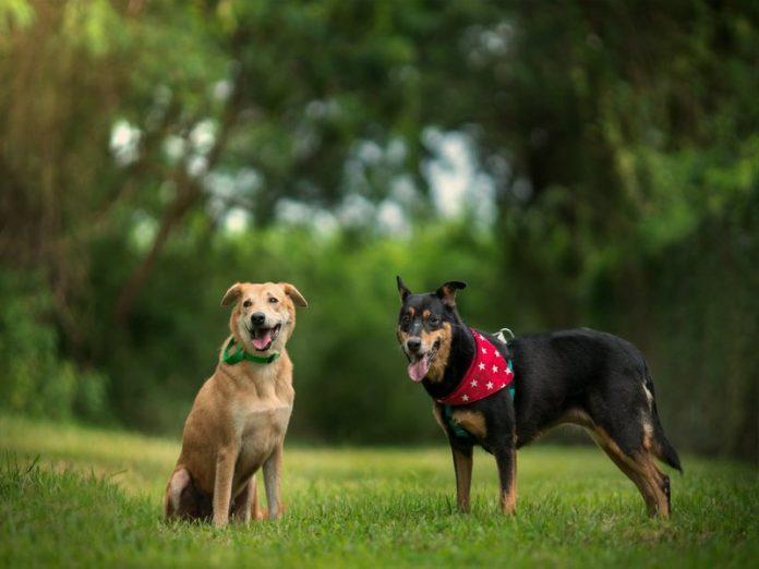 oscas featured image animal shelter singapore