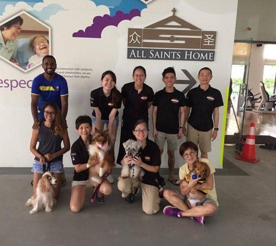 sosd animal shelter singapore
