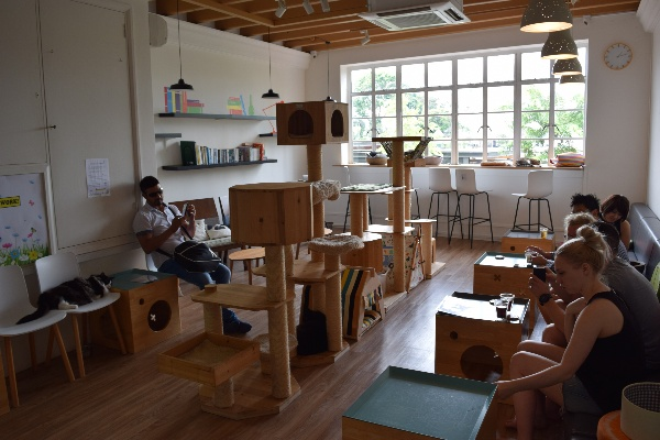 cat cafe best quiet places to study in singapore