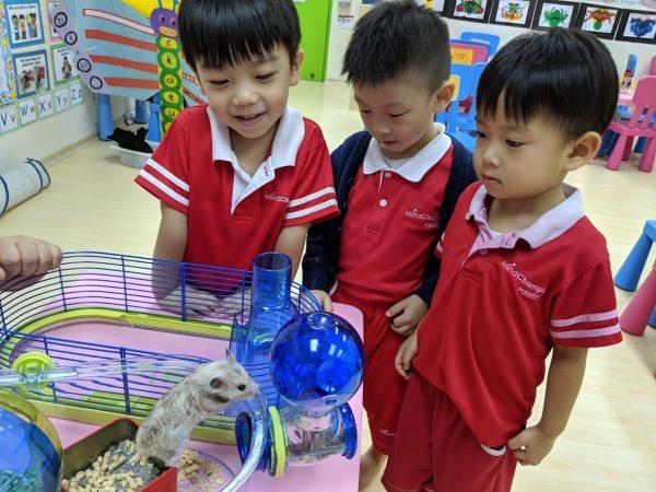 best preschool singapore mindchamps academic curriculum