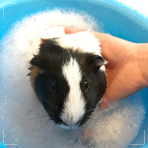 Snob Ark pet grooming