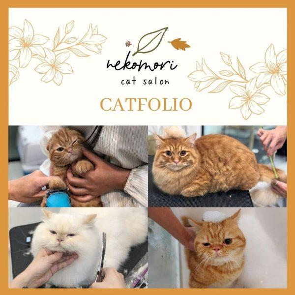 Nekomori cat pet grooming