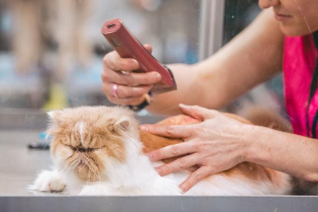 pet grooming in singapore