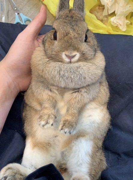 Under The Wroof Pet grooming