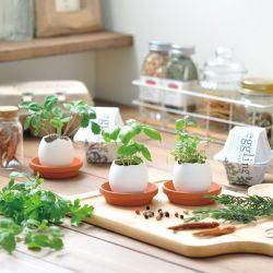 plant a garden indoor activities for kids