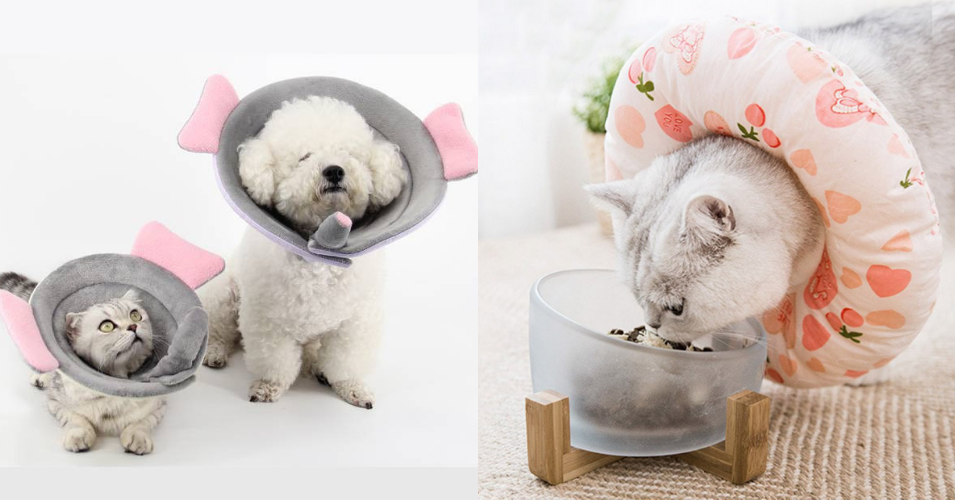 Recovery Collar