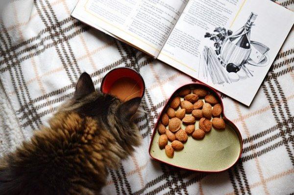 homemade cat food recipe tuna catnip treat heart shaped box kitten