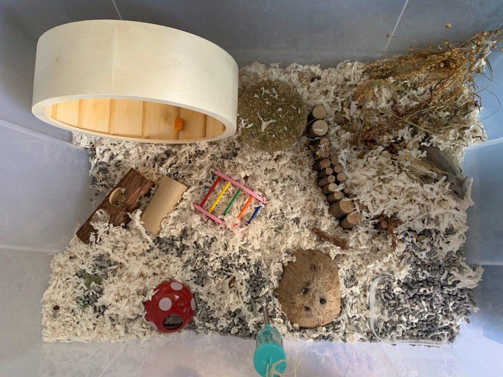 furnishing hamster bin how to take care of hamsters