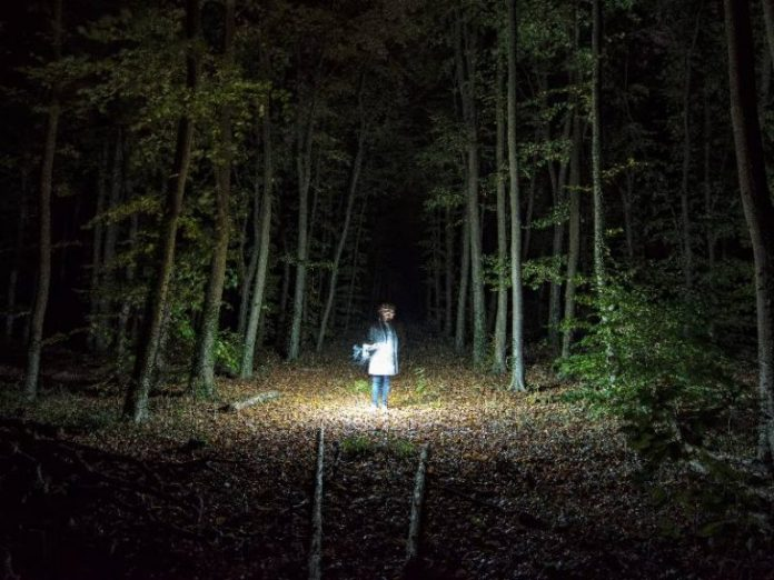 hungry ghost festival horror movies forest woods dark spooky