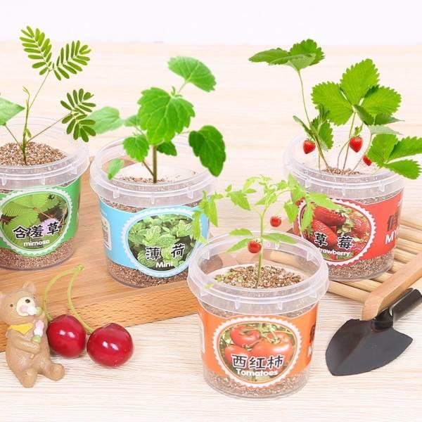 diy mini indoor garden childrens day kids