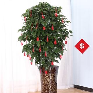 CNY decorations bonsai pendants