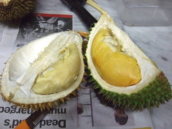 d101 different types of durians