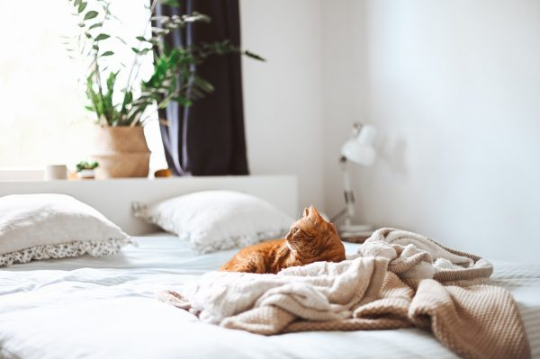 best bedsheet singapore cat on bed white bedding