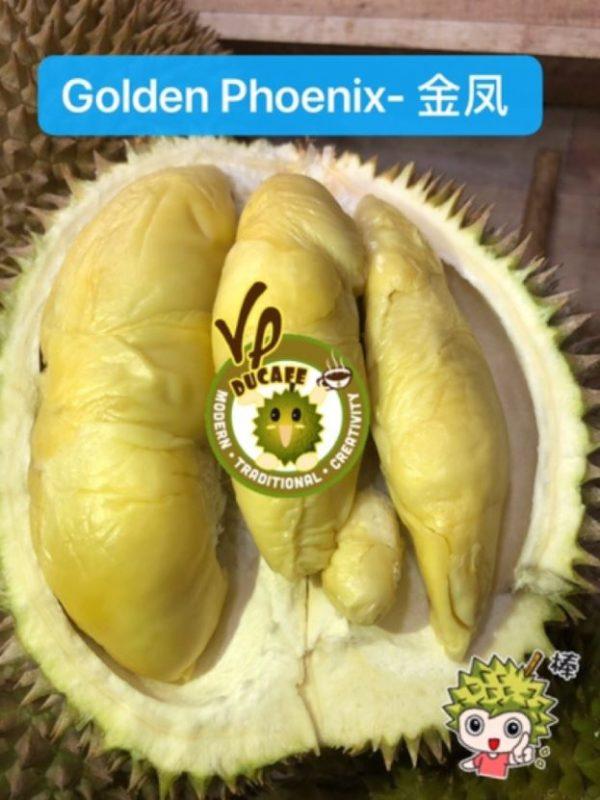 golden phoenix different types of durians