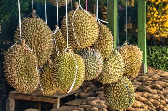 types of durians mao shan wang d24 price hanging at stall