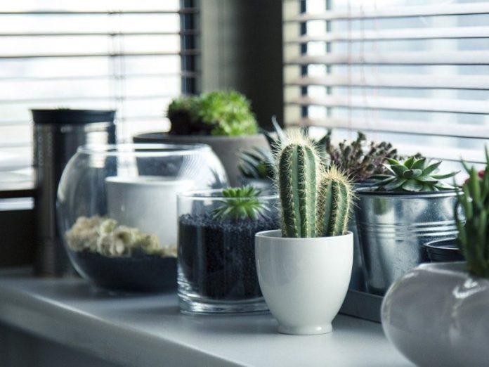 best indoor plants home office decor air plants cactus succulents