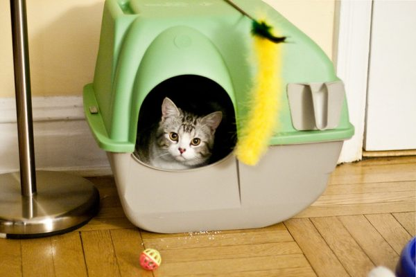best cat litter singapore green toilet